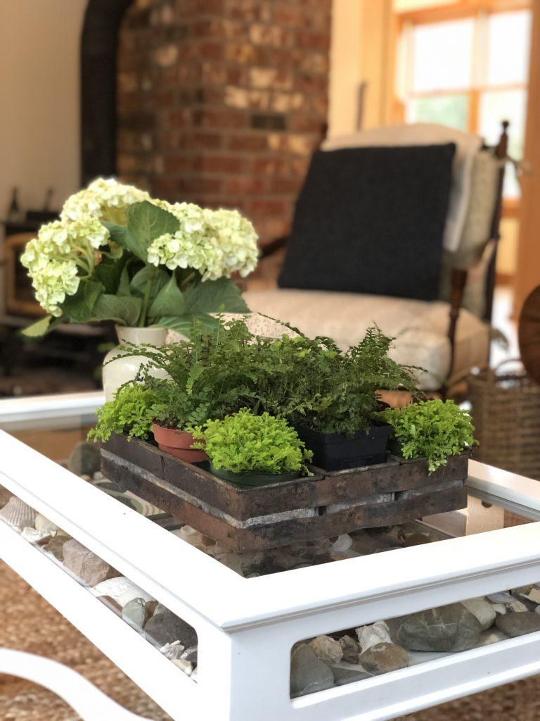 DIY indoor coffee table garden.DIY coffee table gardenDIY ...